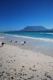 A Beach in Milnerton, Cape Town