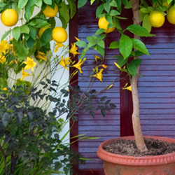 How to choose a tree for a small garden