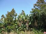 1550 m² land available in Trafalgar photo number 5