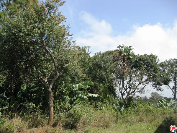 1550 m² Land available in Trafalgar photo number 6