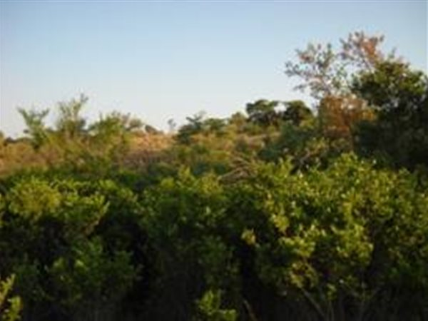 3 ha Land available in Tiegerpoort photo number 0