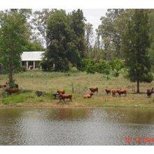 390 ha LAND AREA farm for sale in Polokwane Central | S966582