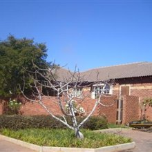 Property in Pretoria East