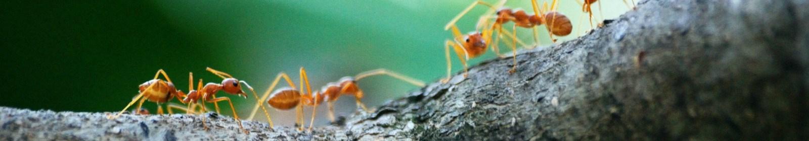 Pest Control - Some Green Alternatives