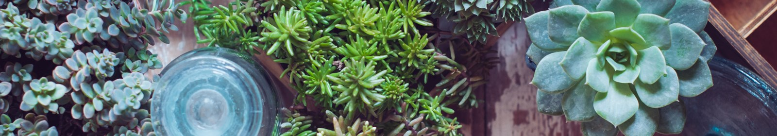 Get water-wise – garden with succulents