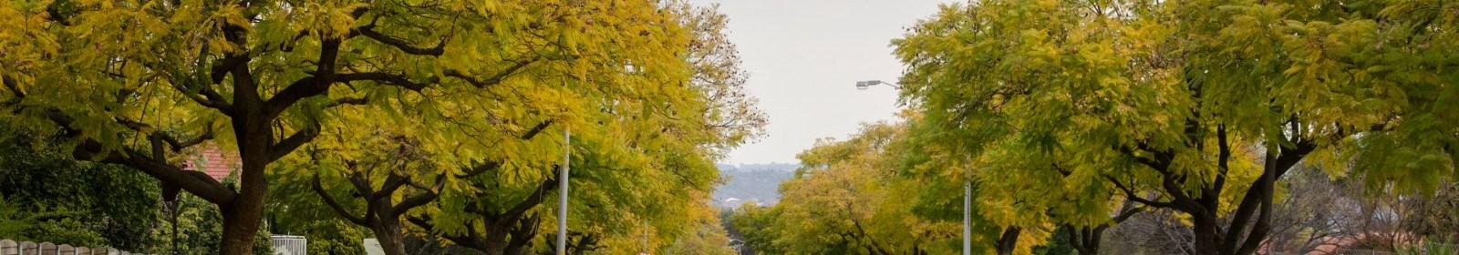 Suburb focus on Villieria, Pretoria