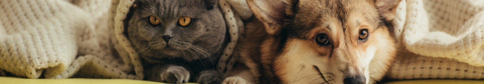 Getting your home pet-ready