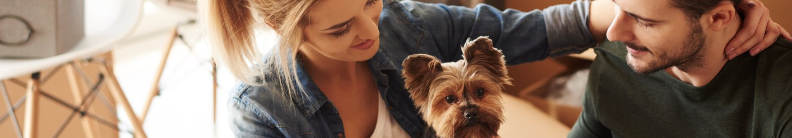 Top 5 pet-friendly areas to rent in South Africa