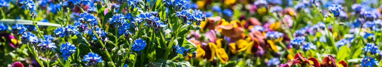 Flowers to plant in your garden this winter