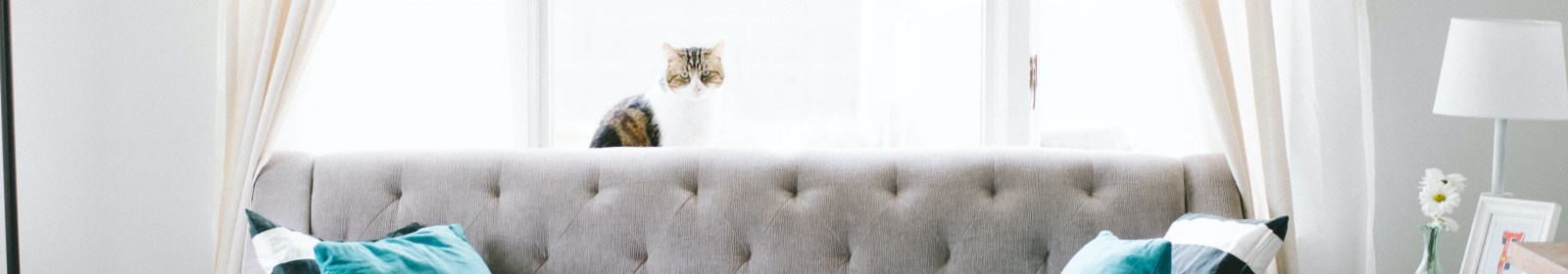 Ultimate guide to moving with Cats