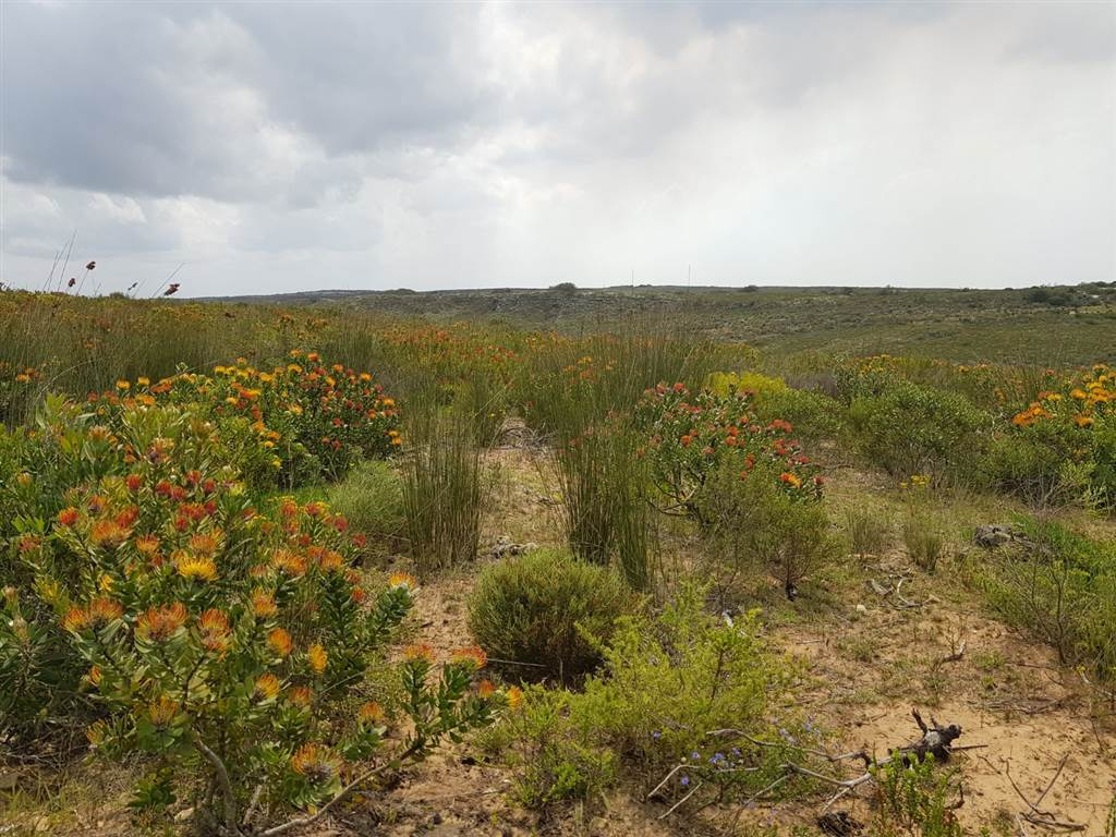 104 ha Farm in Jongensfontein