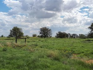 259 ha Farm in Hoopstad thumb
