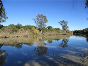 Maselspoort Property And Houses For Sale Private Property