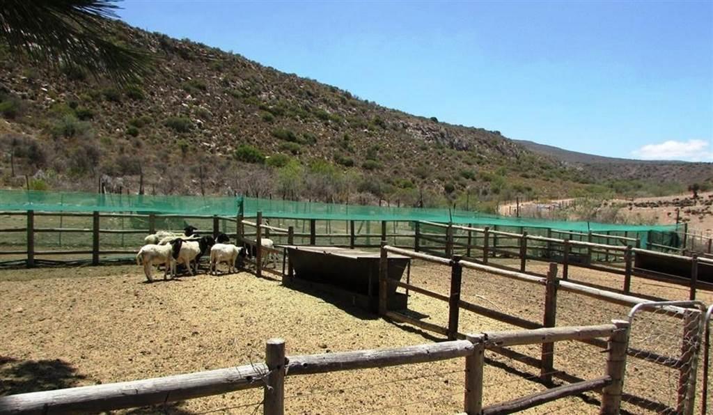 333 ha Farm in Ladismith